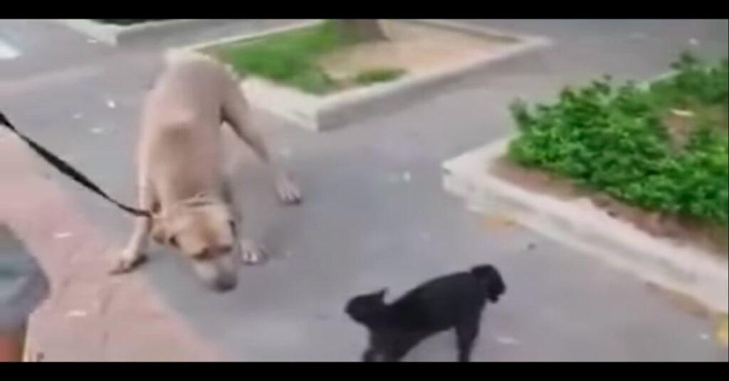 madre di un gattino affronta grosso cane