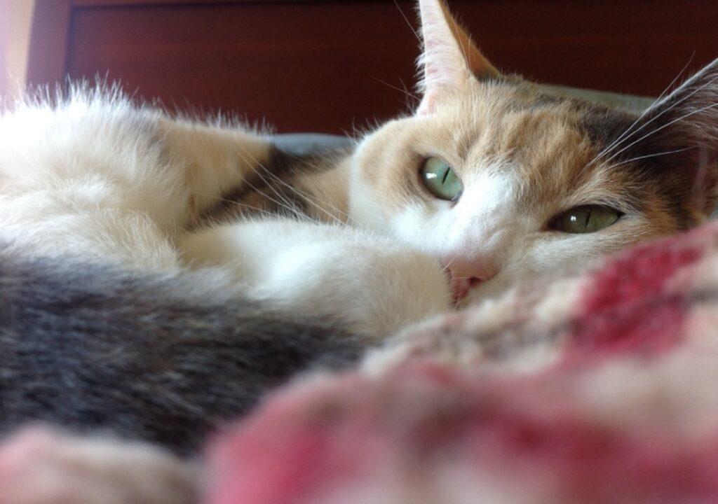 milano gatto disperso viale