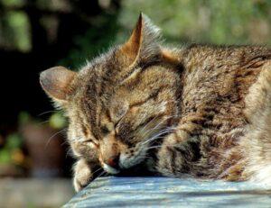 gatto shiro scappa via di casa