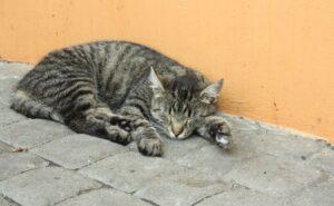 gatto abbandonato busta sotto sole