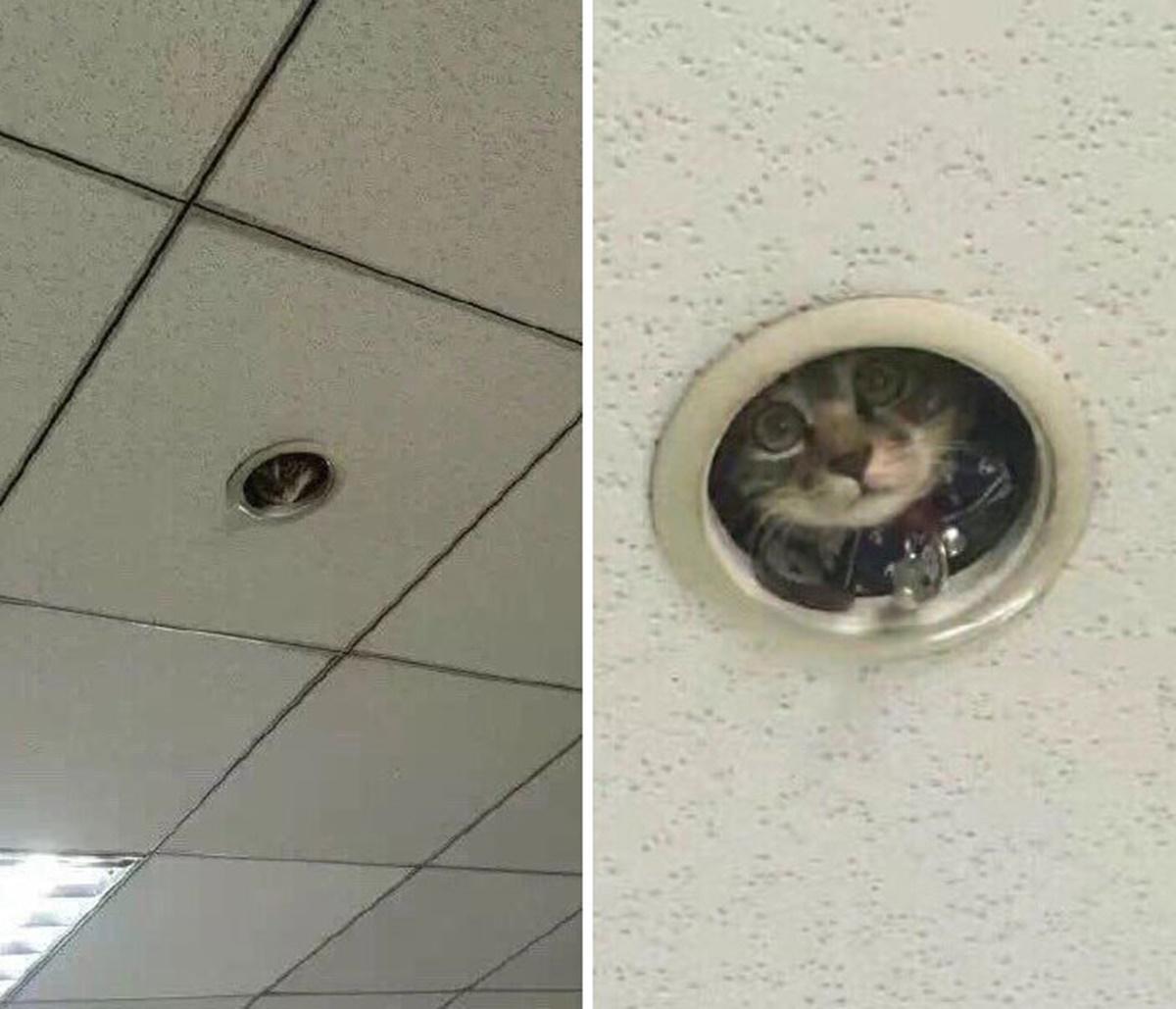 gatto elettricista