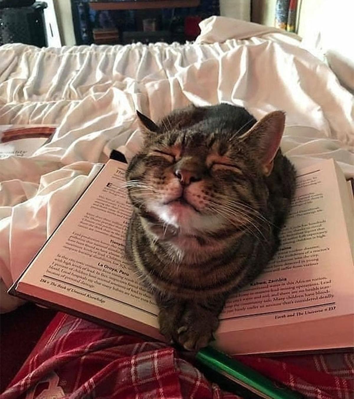 gatto segnalibro
