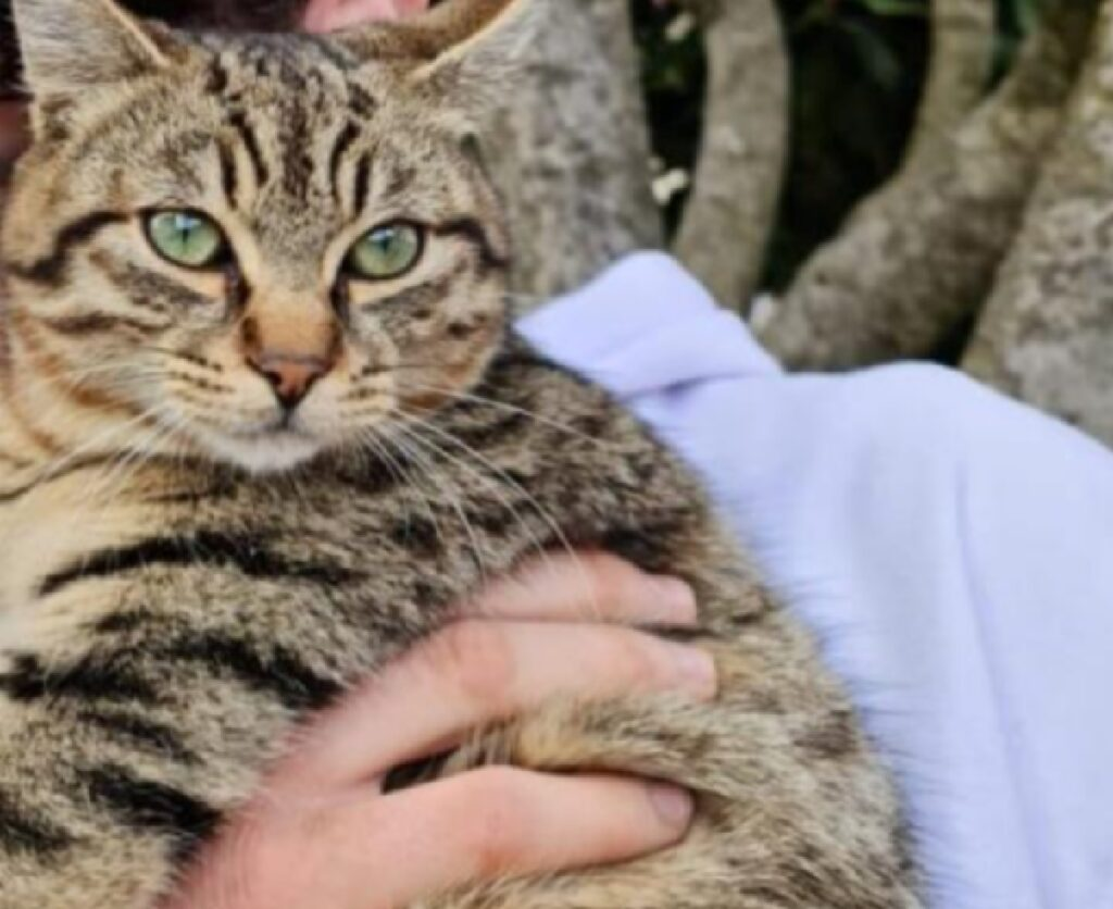 gatto soriano mano umana