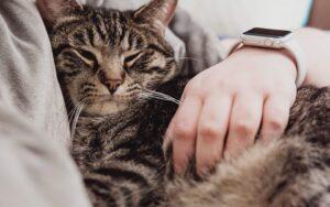 gatto tra le braccia del padrone