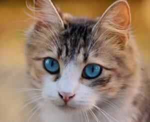 gatto occhi grandi perso