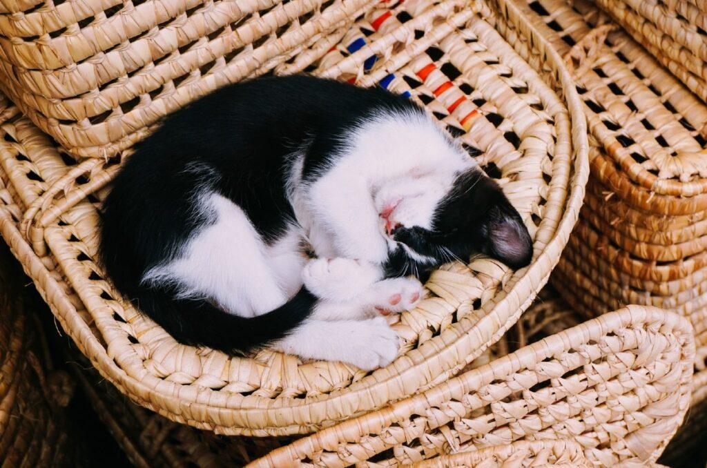 gattino acciambellato