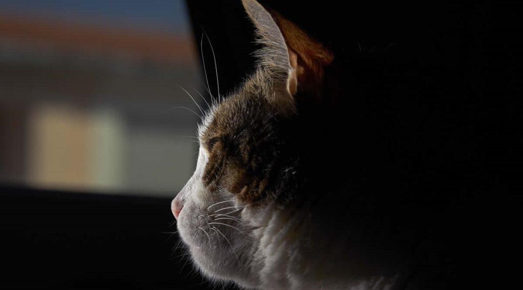 gatto veglia sull'amico investito