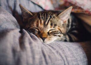 gattino dorme su cuscini grigi