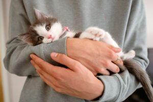 gattino tenuto in braccio