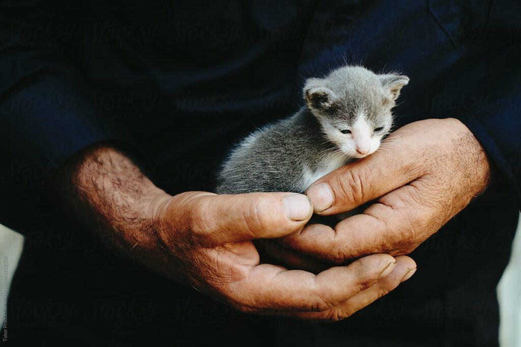 cucciolo di gatto tenuto tra le mani
