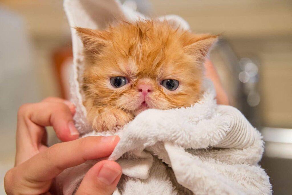 gattino avvolto in un asciugamano