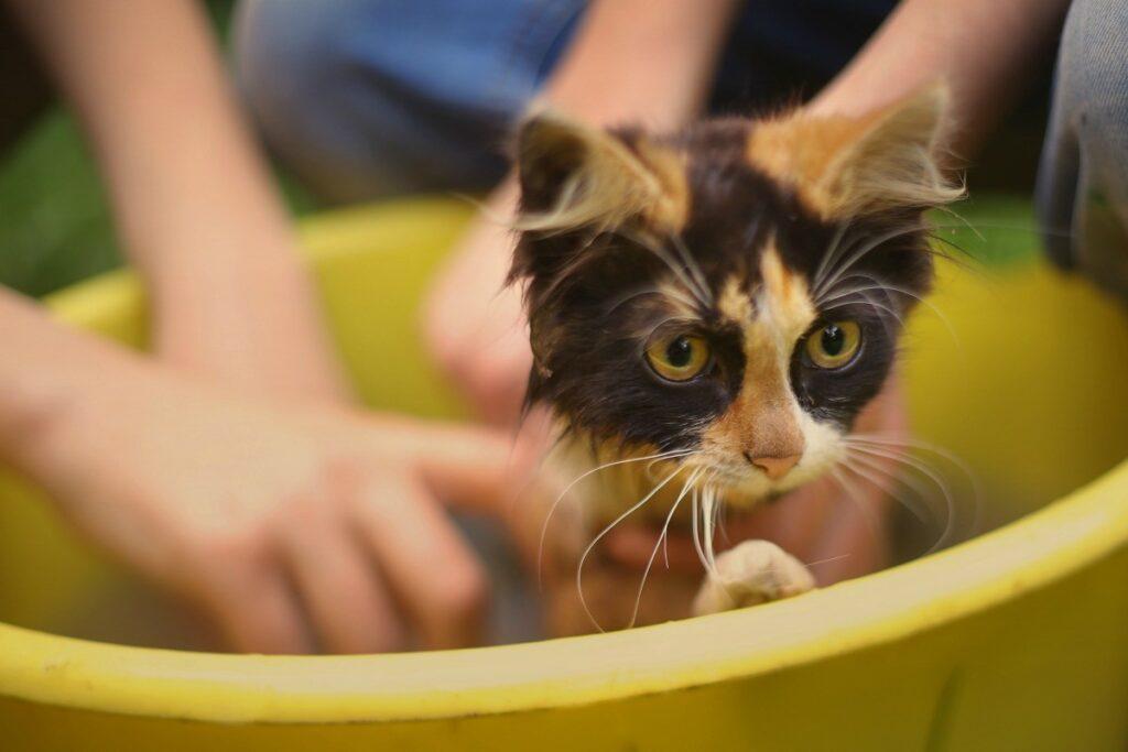 gattino si fa il bagno