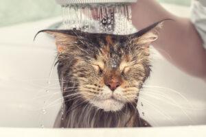 quando toelettare il gattino