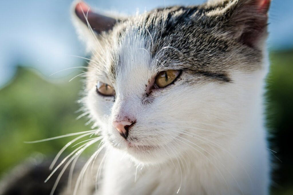 gatto illuminato dal sole