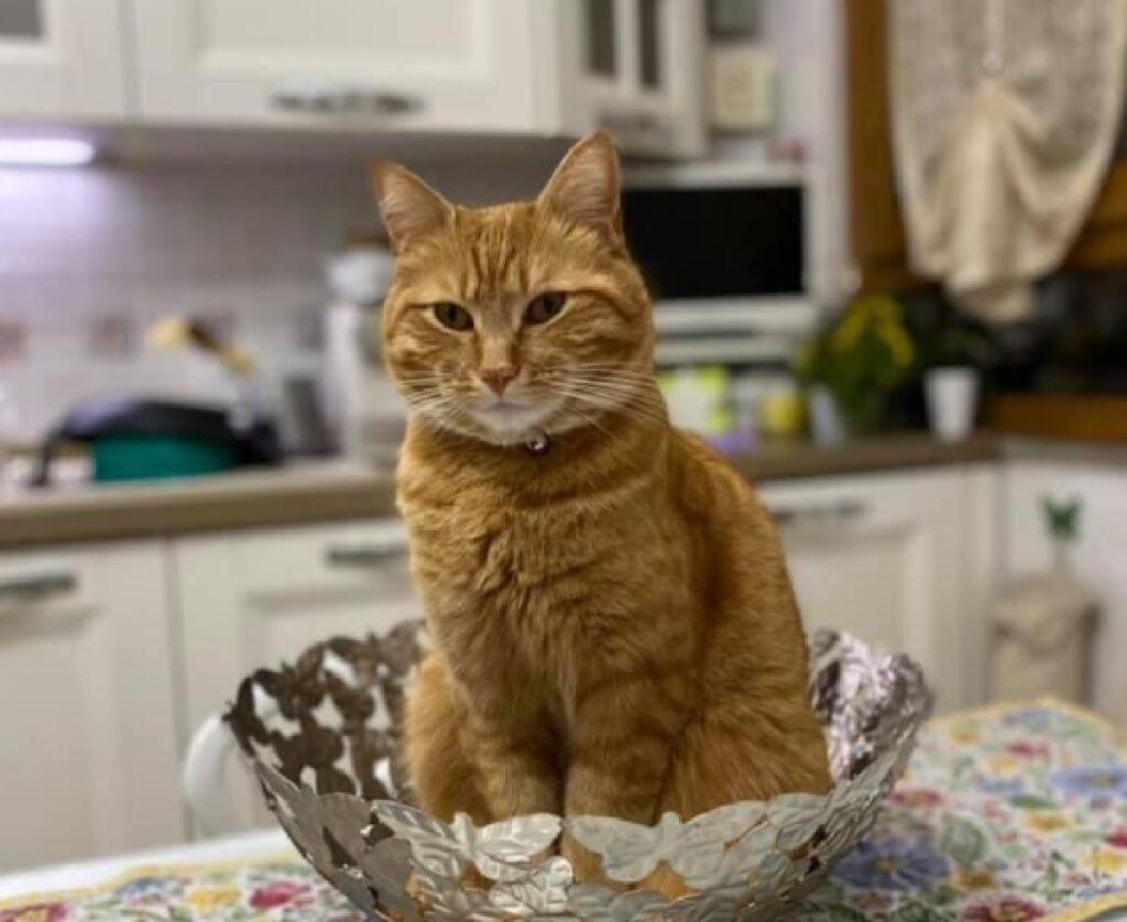 gatto dentro cesto in metallo