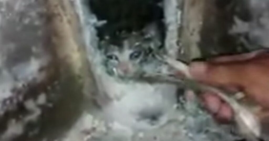 salvataggio di un gattino in Colombia