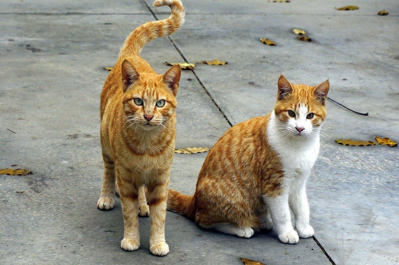 gattini gironzolano insieme