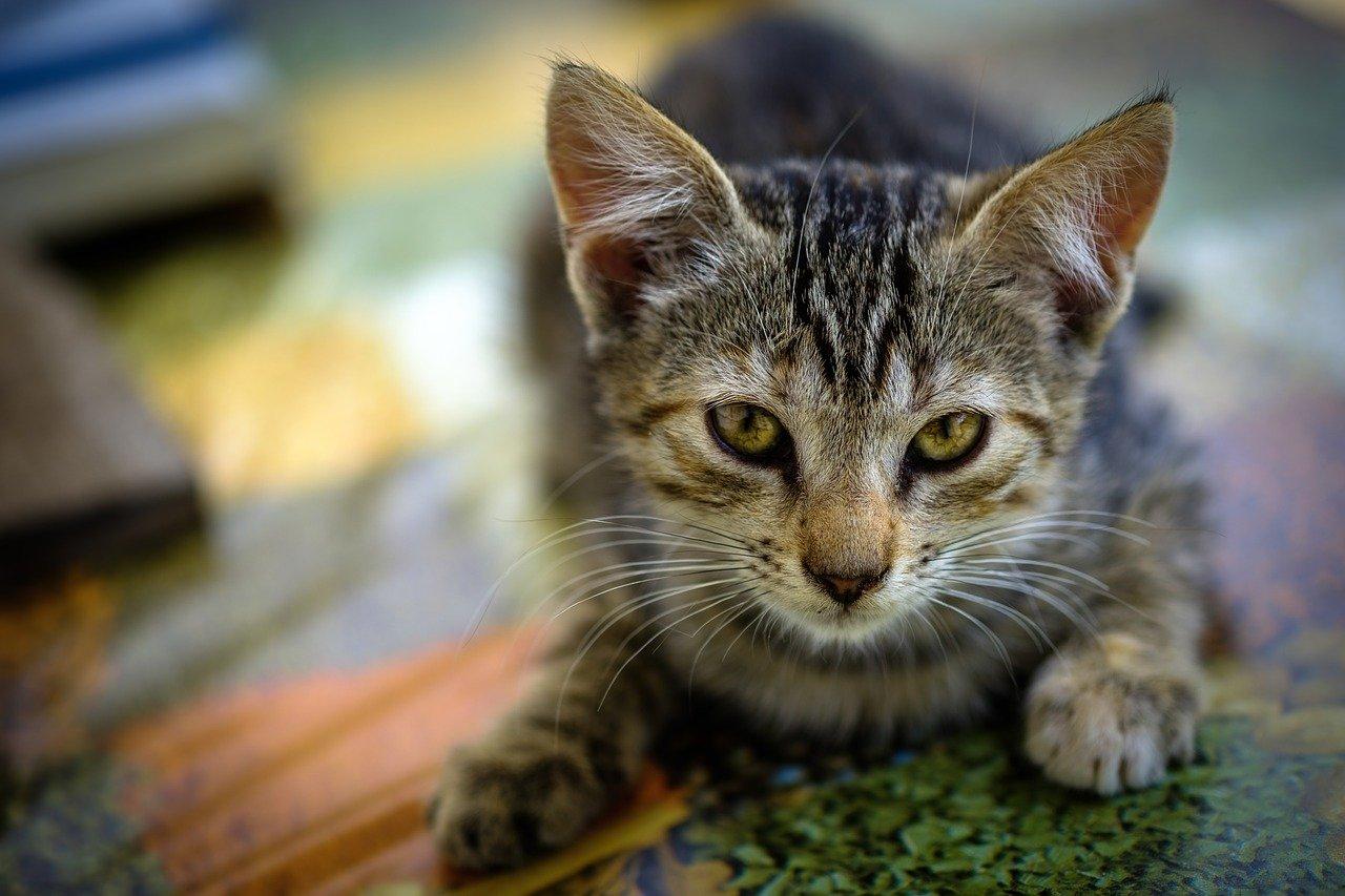gattino pronto all'avventura