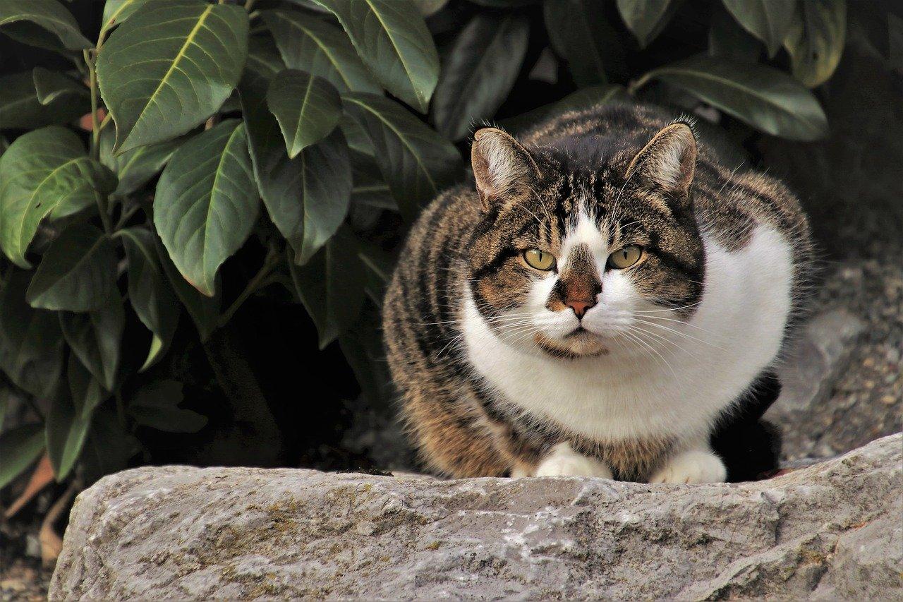 gatto pronto a colpire