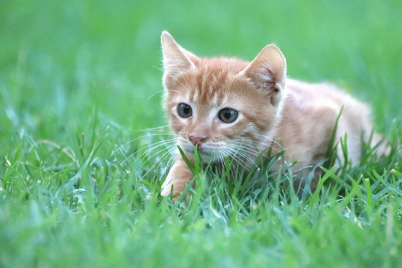 gattino punta la preda