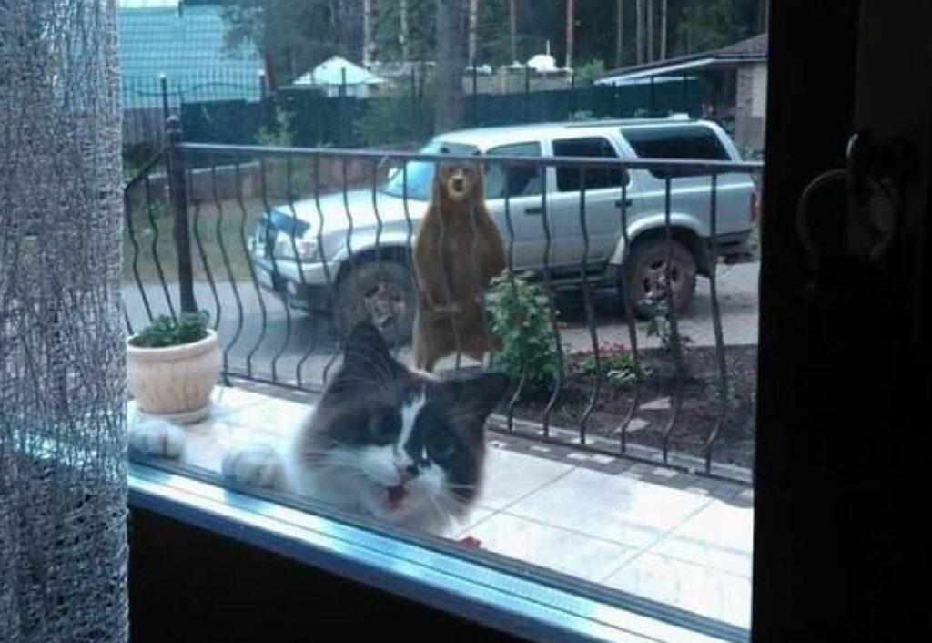 gatto avvisa mamma orso