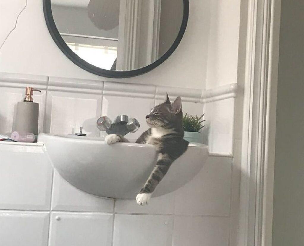 gatto vasca da bagno lavandino