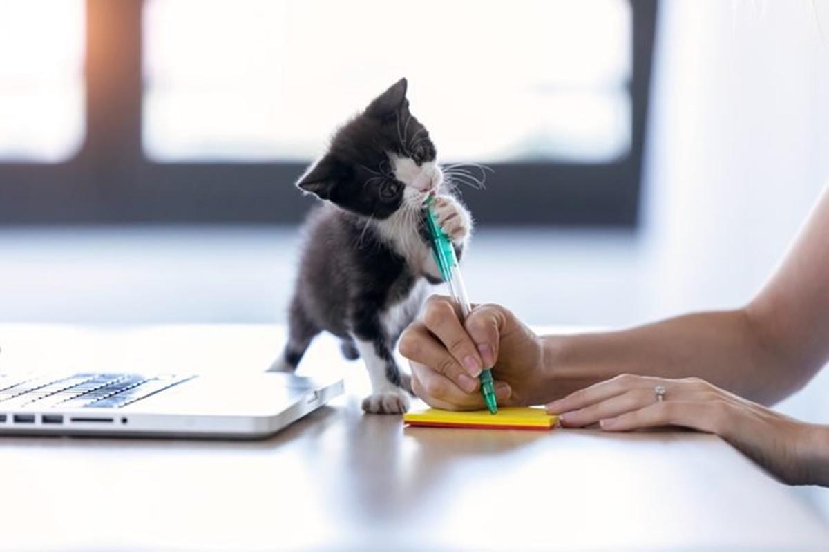 gatto chiede aiuto