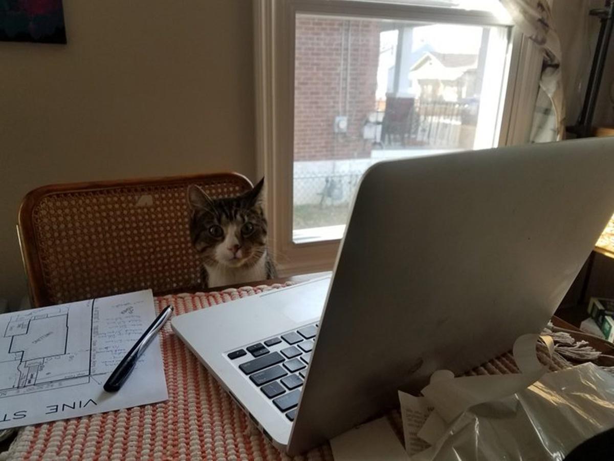 gatto prende appunti