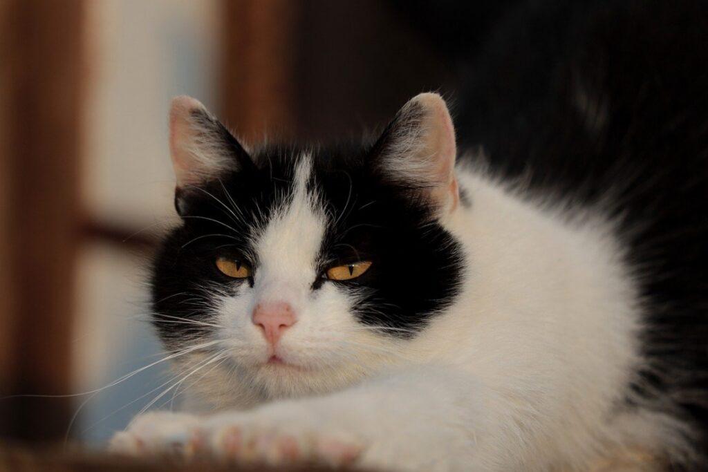 gatto faccia infastidita
