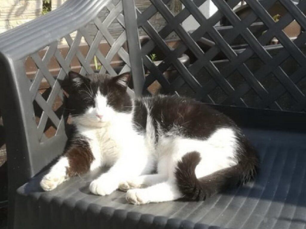 gatto silvestro seduto su panchina