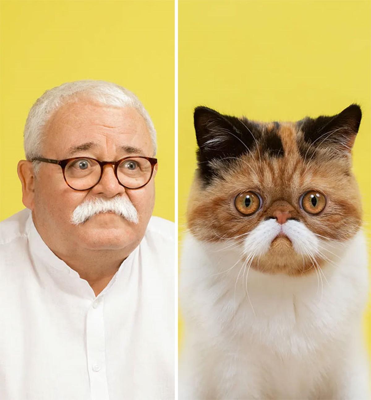 gatto occhiali