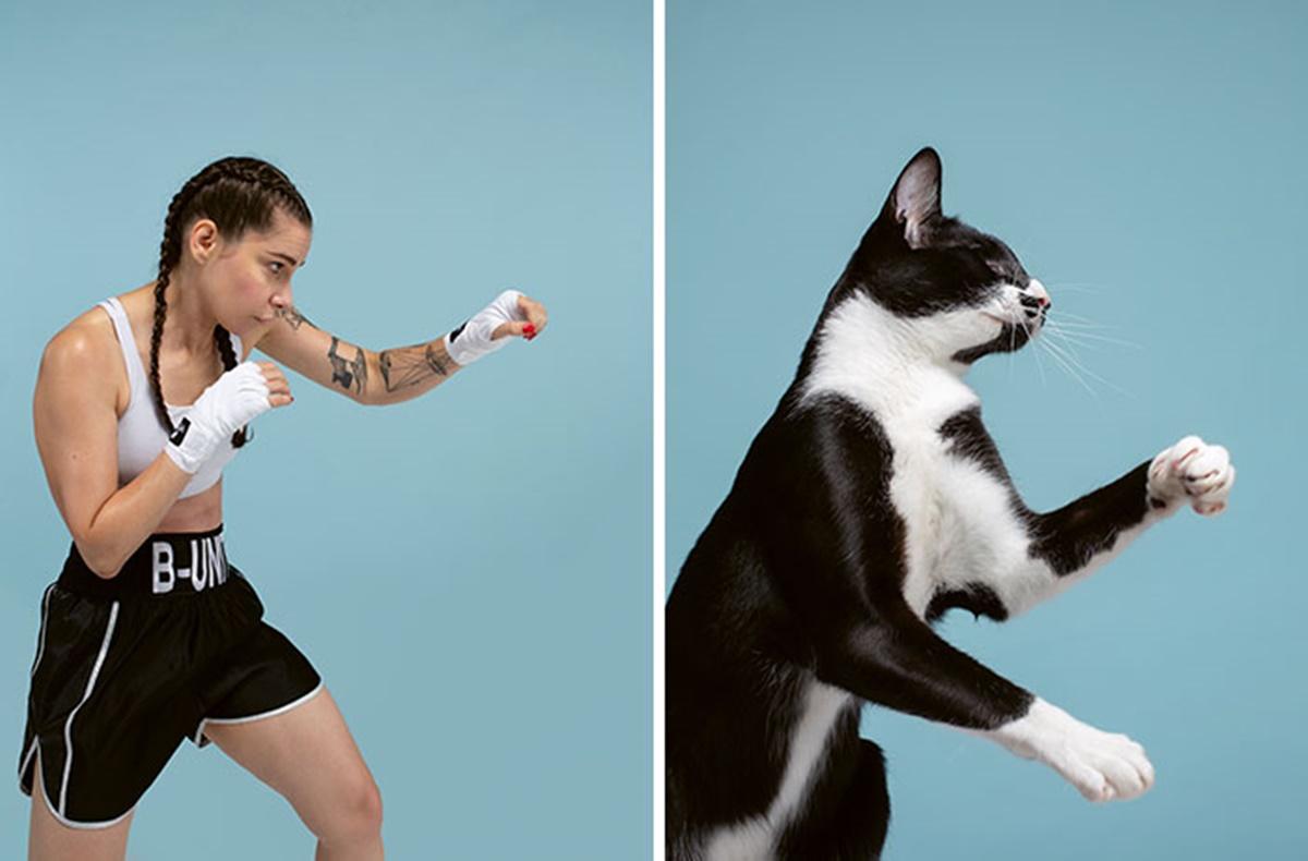 gatto lottatore
