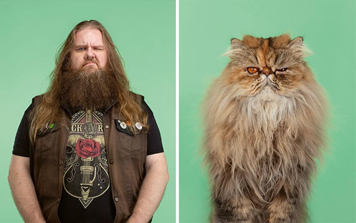 gatto rockstar