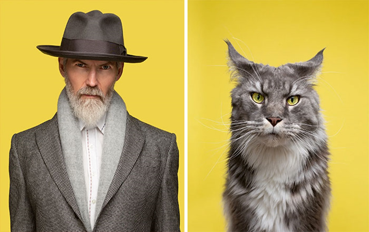 gattino gentleman