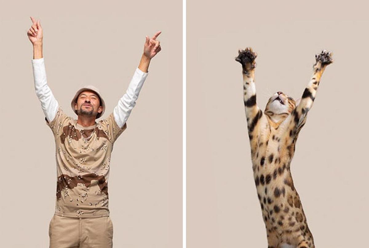 gattino safari
