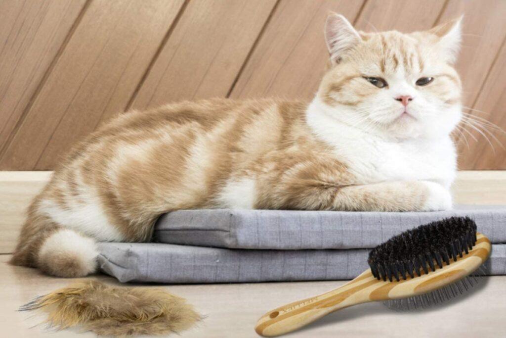 spazzola doppia per gatti