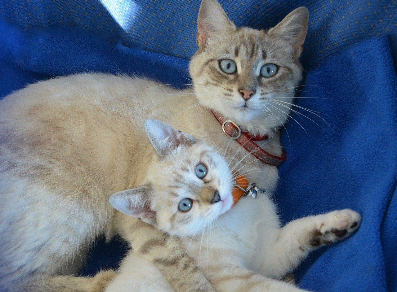 gattino accoccolato sulla mamma