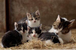 mamma e cuccioli di gatto