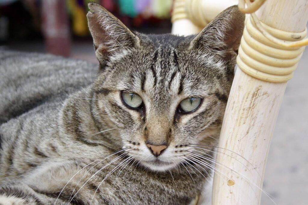 gatto appoggiato alla sedia
