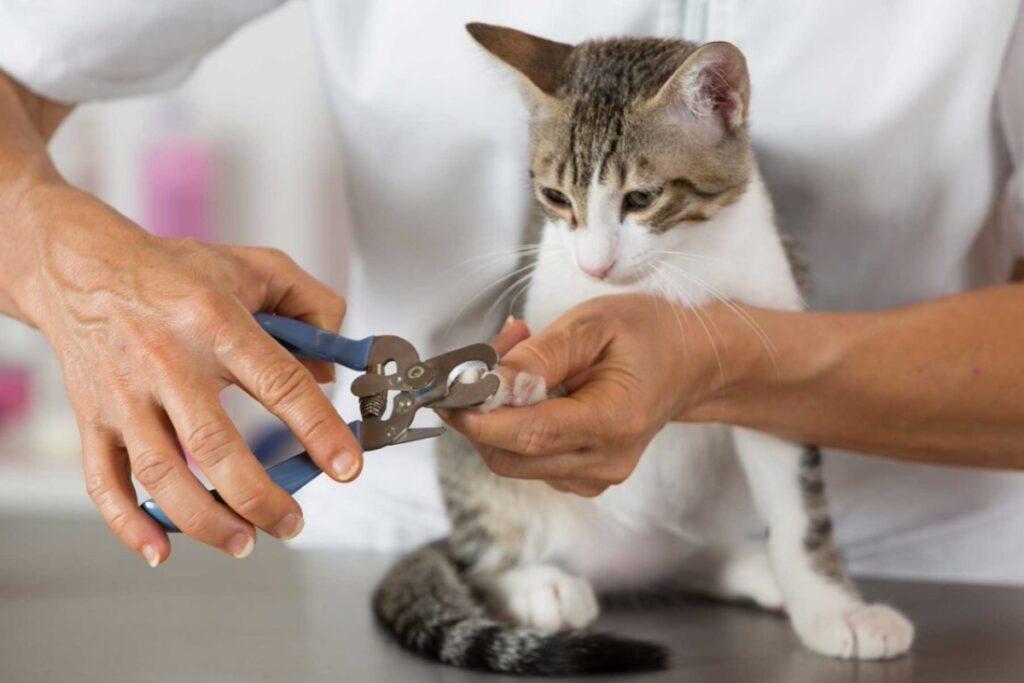 Accorciare le unghie al gatto