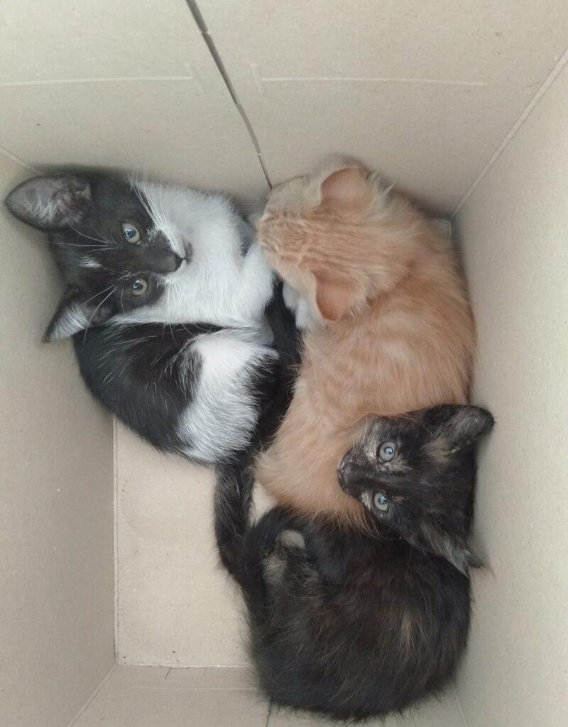 cuccioli di gatto teneri