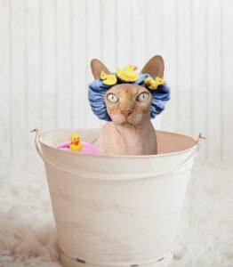 gatto con cuffietta in un secchio per bagno