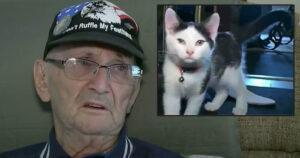 Veterano salvato dal gatto