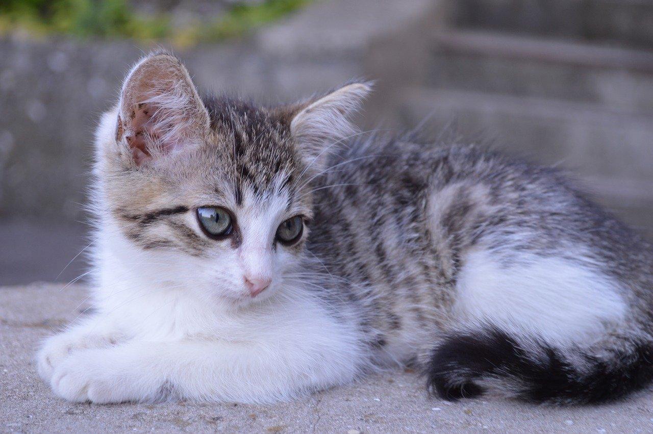 gattino riposato
