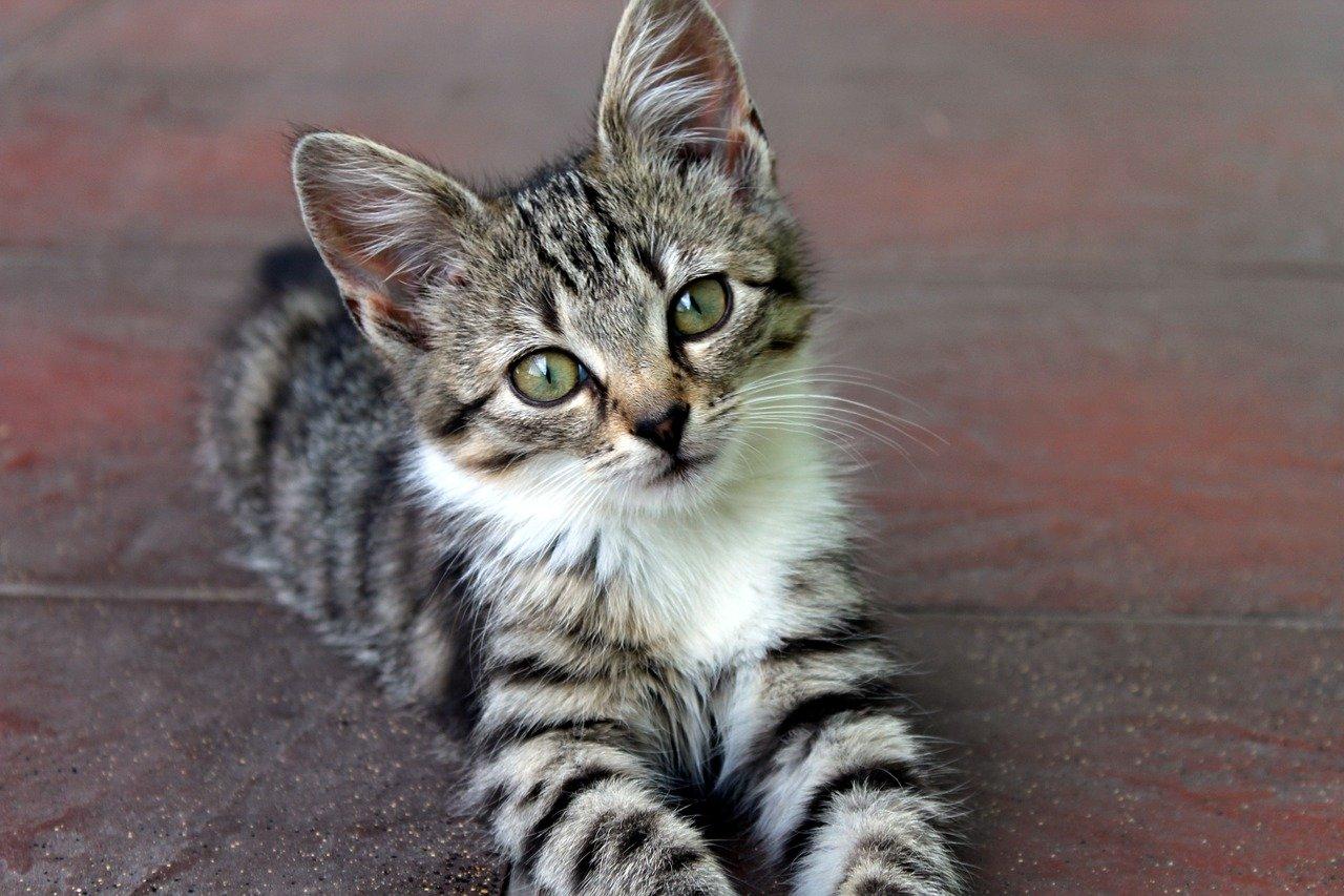 gattino sguardo tenero