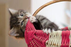 gattino gioca con cesta
