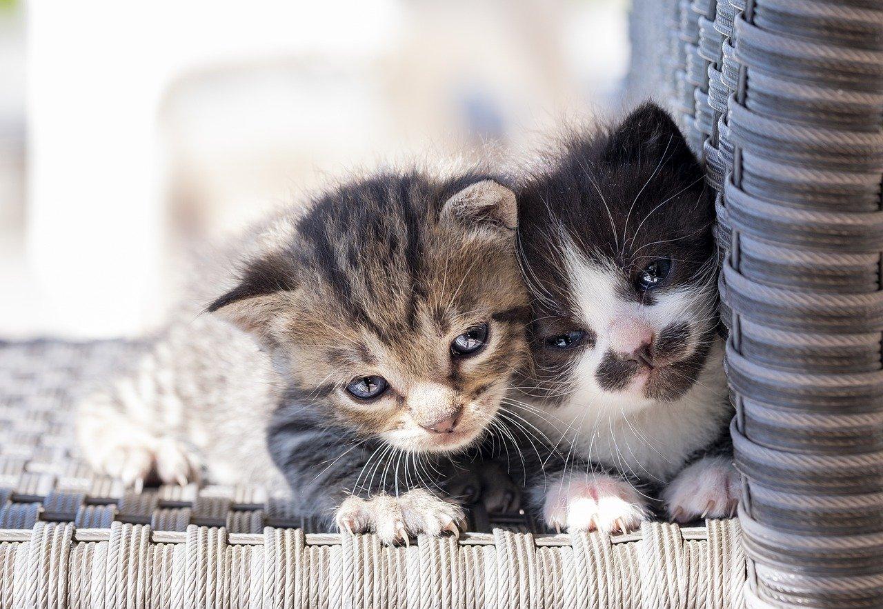 gattini si coccolano