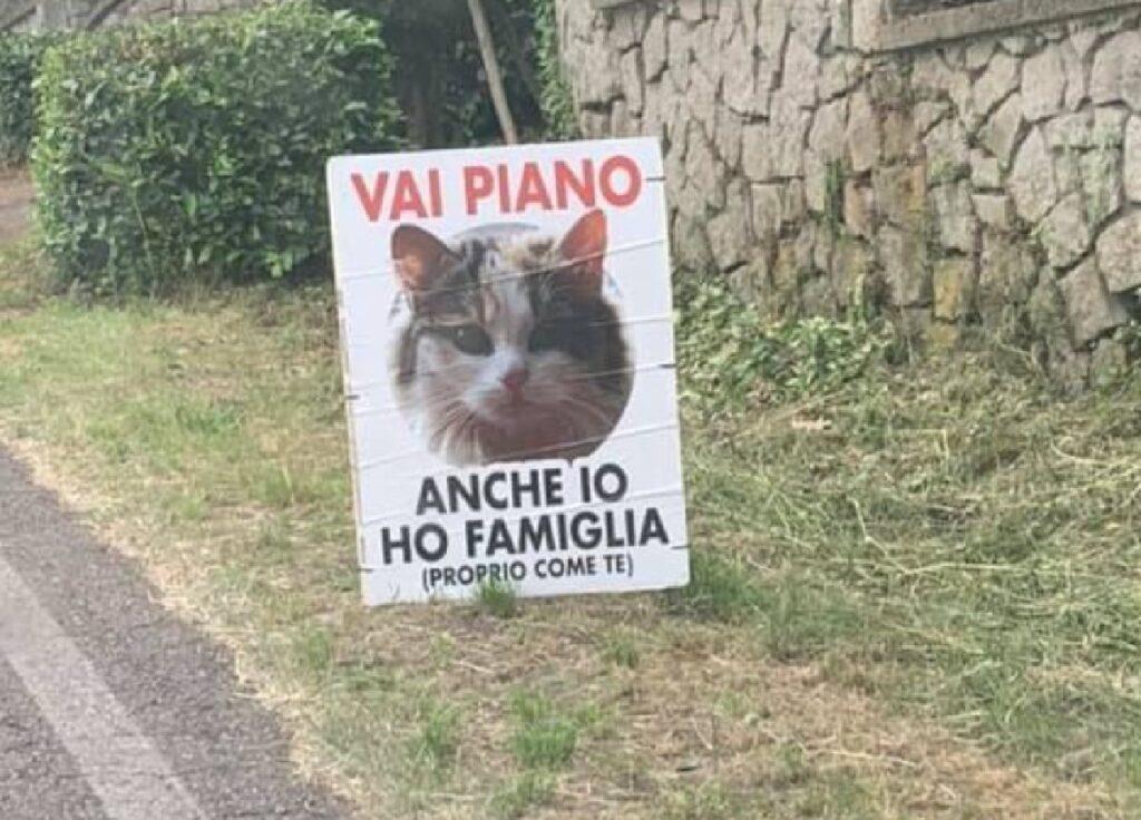 gatto cartello su ciglio strada