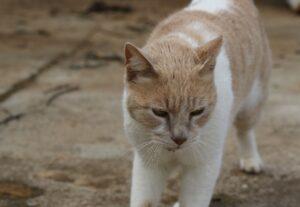 gatti testimonial campagna sicurezza stradale