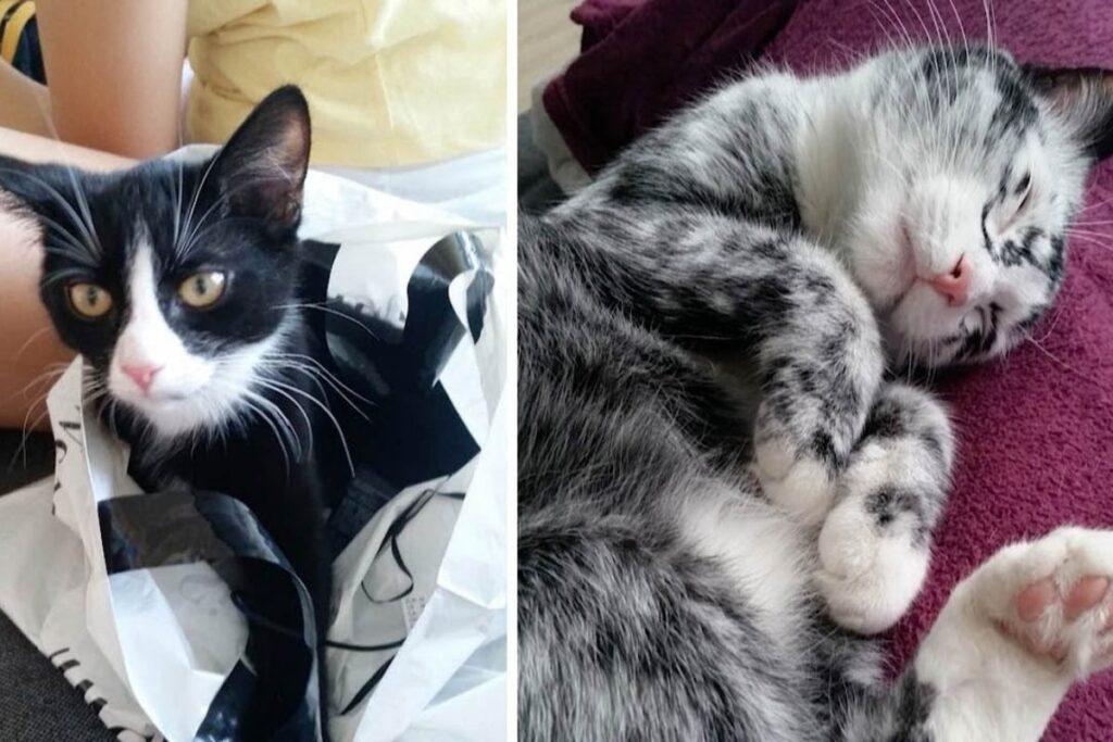gatto che si è trasformato